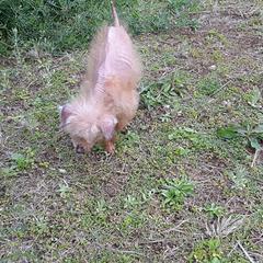 小さい小さい老犬です。