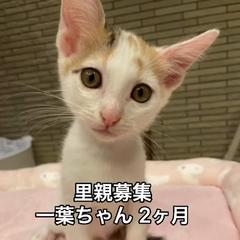 cuteなお顔⭐️白ミケ女の子一葉